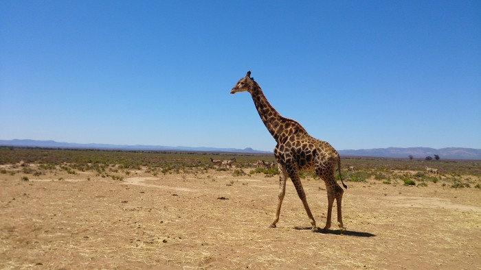 南アフリカの野生動物と、彼らを守る人々の誇りに出会った~新すみな(ライター)
