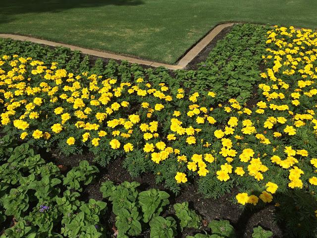 パース市庁舎の花