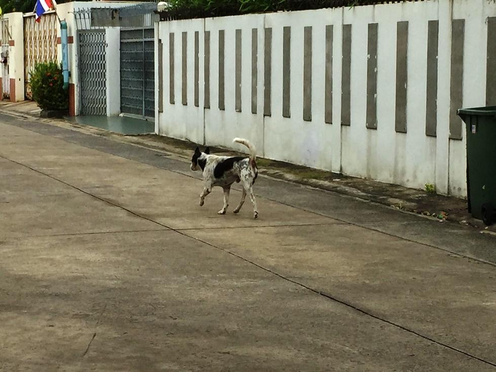 近所の飼い犬