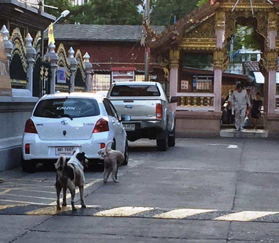 街の野良犬