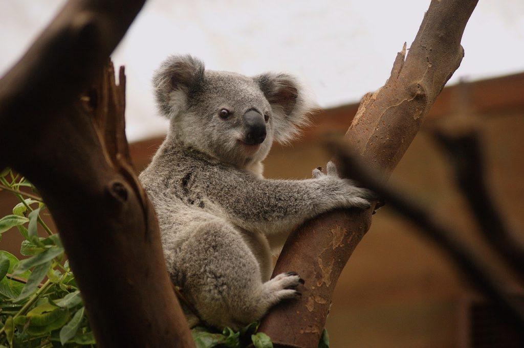 オーストラリア留学は大学生や社会人にも魅力的!メリット・デメリット、よくある疑問の答えを解説