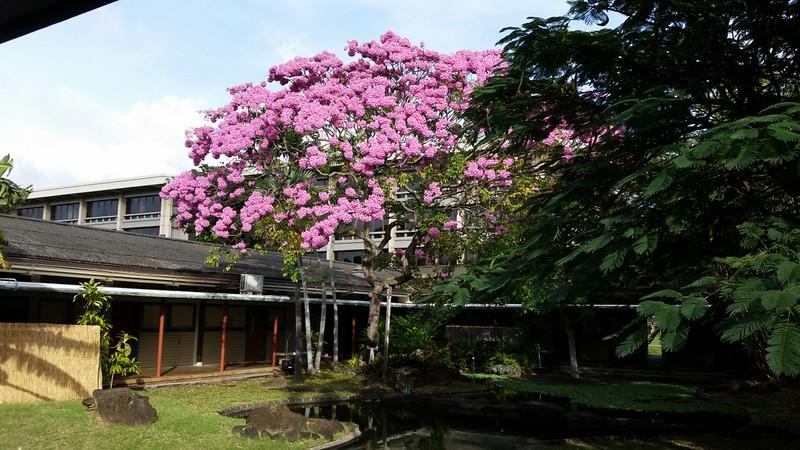 ハワイ大学マノア校留学ガイド 偏差値や入学条件、学部や学費などの留学情報